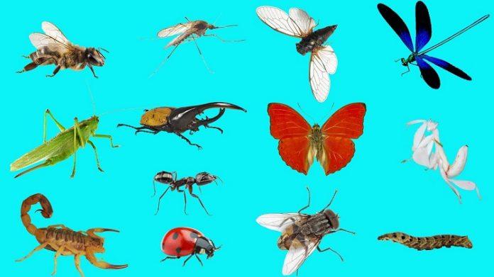 côn trùng trong tiếng anh là gì