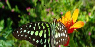 Từ vựng tiếng Nhật về các loại côn trùng